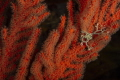 A star was borne