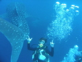 Lucky when the whaleshark pass
