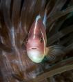 Surprised Nemo