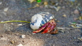 Hermit Crab making his way down a black sand beach in St. Kitts. Taken with LUMIX FZ 1000