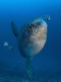 Mola Ramsay