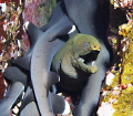 Moray eel between sleeping young white-tip sharks