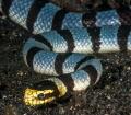 Sea Snake!!!