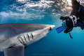 Blue Shark getting up close and personal