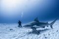 Shark Tourist