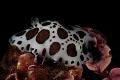Underwater cow
