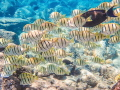 Snorkeling  The Dumps  Maui