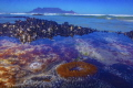 Underwater Cape Town.A sandy anemone keeps guard with Table Mountain, one of the seven wonders of the world, in the background