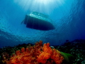 A diver just off the Yap divers boat on top of a reef in the crystal clear waters of Micronesia.