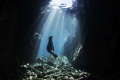 LA Paz, Los Islotes in Mexico. A protected sea lion colony. Here is a sea lion pup playing in a cave under the sun beams.