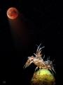 moonstruck - lunar eclipse