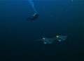 Early morning dive. Two small creatures appeared on fron of me as aliens. This is how I felt - first meeting with UFO :-)