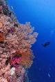 wonderful corals