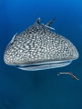 Dome to Dome