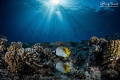 Seascape and butterfly fishes