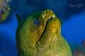 Green Morey, Plataforma Tiburon México