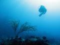 Diver at French Cap, U.S. Virgin Islands