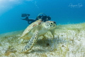 Turtle with Diver  Cancun M xico