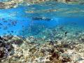 Coral Reef  Snorkeler  Fish  Bora Bora
