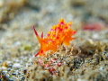 Hazey Jane
