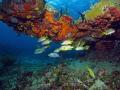 One of several colorful ledges at Calf Rock  U.S. Virgin Islands
