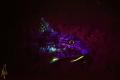 Spotted goatfish under blacklight