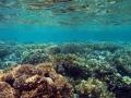 Shallow Coral Reef, Wakatobi Marine Preserve, Indonesia