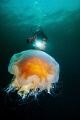 Diver and lions mane jelly