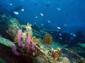 Wreck of the RMS Rhone, Salt Island, British Virgin Islands