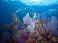 Dry Rocks Reef, John Pennekamp Coral Reef State Park, Key Largo, Florida