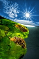 Reflection solar
