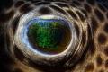Eye of the pufferfish in Secret bay