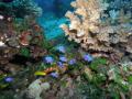 Marine Life Dauin