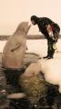 white whale kiss