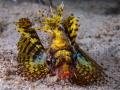 yellow scorpio