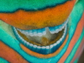 Smile of a parrotfish.