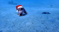 Merry Christmas Underwater Photographers