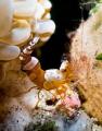Sexy Shrimp!!!