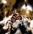 Crab Day!!!