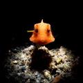 Snooted Boxfish!!!
