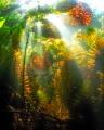 Underwater fall.