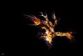 dendronotus regius Anilao - Philippines http://www.fotocommunity.de/photo/baumschnecke-lo-michaelis/43436065