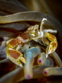 You gotta  Frond in me