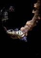 Coral shrimp Pontonides ankeri