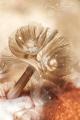 beatiful anilao , horseshoe worm