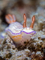Wild Thing