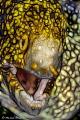Snowflake moray eel  fractal image