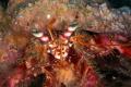Hermit crab  Canon macro 60mm 1/200 f/18 iso200