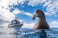 A Northern Giant Petrel curious about its reflection in my dome dwarfs the onlooking tour boat. This funny bird followed me in the water for 20 minutes and spent most of the time right in front of my camera. An unforgettable encounter!