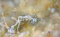 Little sea slug Bokeh  Nikon D7200  Sea&Sea YS-D2 Tamron90mm + subsee+10